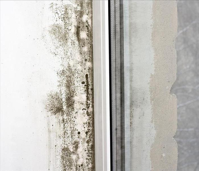 Managing Mold at Home  Before