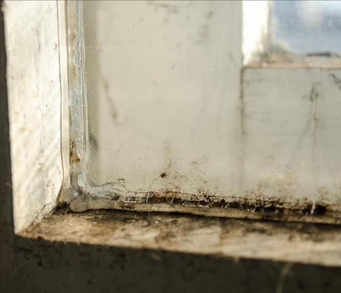 Mold on window sill